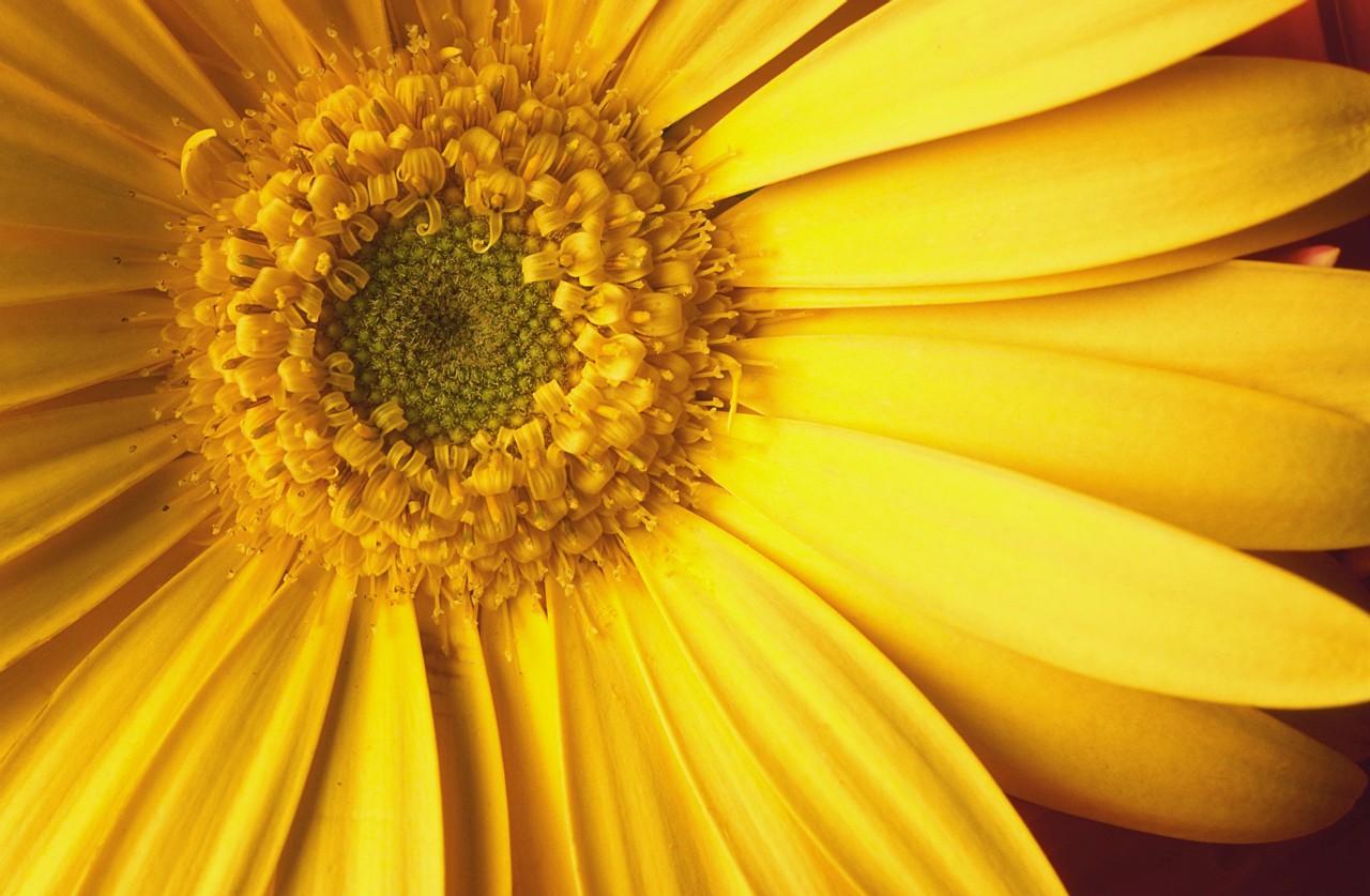 Картинки, картинки желтого цвета