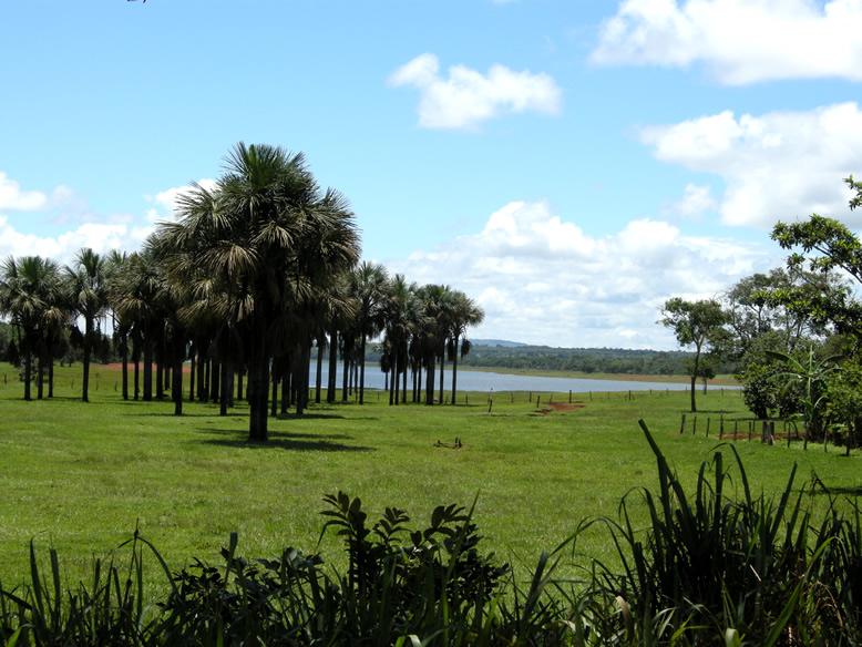 Vereda-Minas-Gerais-state