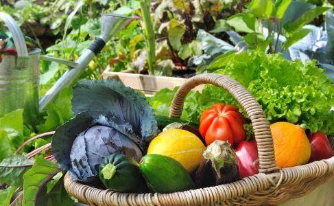 healthy-food-vegetables